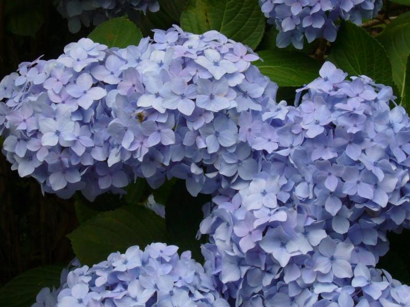 花の郷 滝谷 花しょうぶ園
